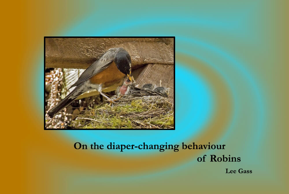 On the Diaper-changing Behaviour of Robins