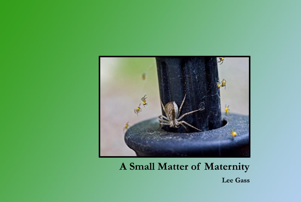 A small matter of maternity