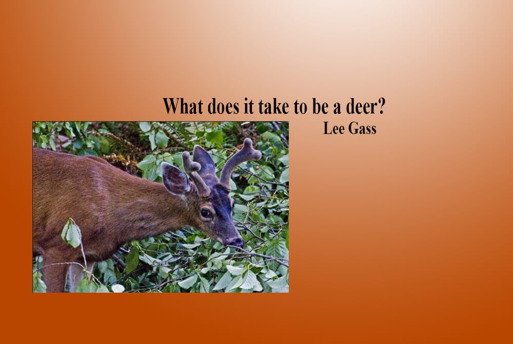 What does it take to be a deer?